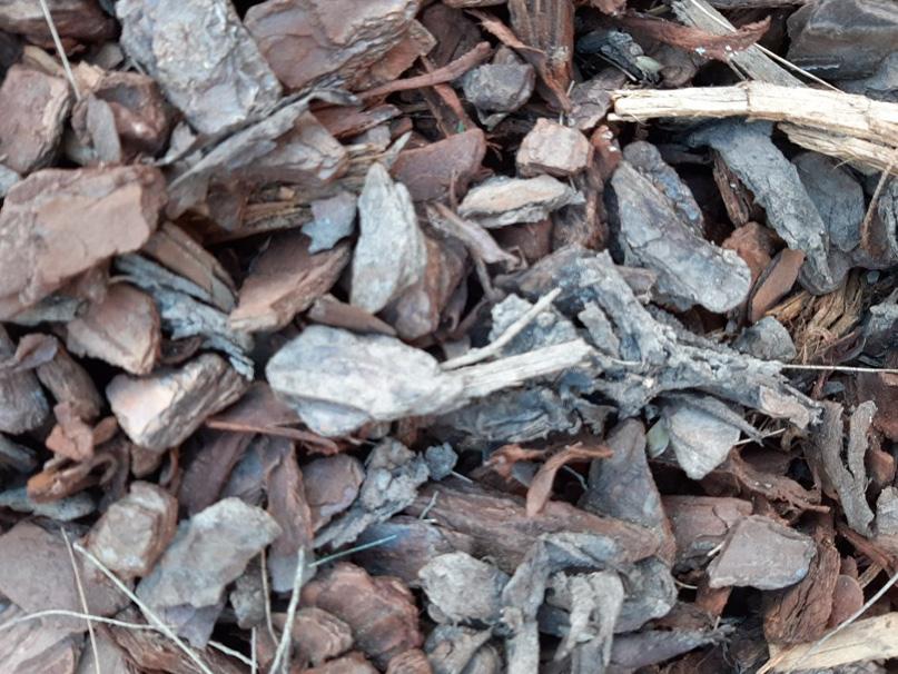 Mulch sample Pine Bark 25mm
